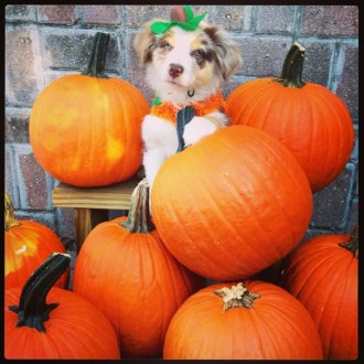 A little pumpkin in the pumpkin patch.