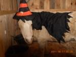 binky witch pony horse halloween costume