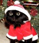 grinch cat in santa claus halloween costume