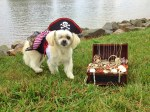 one-eyed pirate pup dog halloween costume