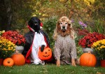 dracula vampire and joe dirt dogs in halloween costumes