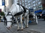 NYC New York Horse Carriage