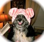 dog in animal stripe hat halloween costume