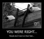 people dont land on their feet, cats meme