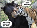 bear and tiger, unusual animal friends