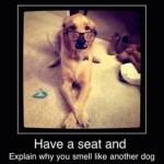 dog meme, have a seat