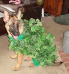 chia pet dog in leaves halloween costume