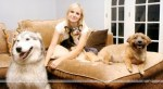 kristen bell with dogs