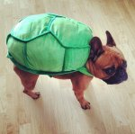 PET HALLOWEEN COSTUME, DOGS AND PUPPIES IN COSTUME, TURTLE COSTUME