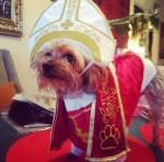 dog wearing pope halloween pet costume