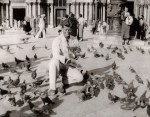Kennedy and the pigeons