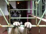 Winston Caged