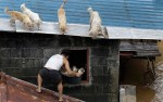 Dogs and Puppies Being Rescued During Typhoon