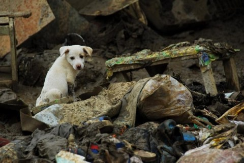 dog stranded in Philippines after Typhoon Yolanda/Haiyan