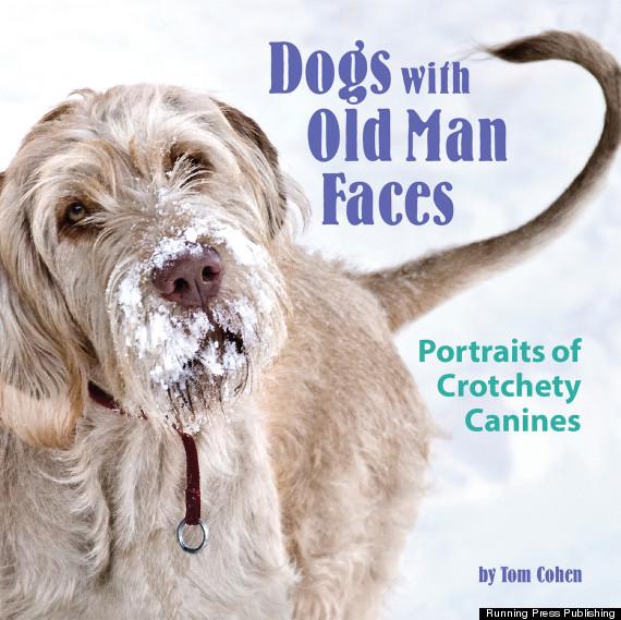 Funny Pictures, Dogs, Funny Dog Pictures, Dog Pictures, Captions, Memes, Funny