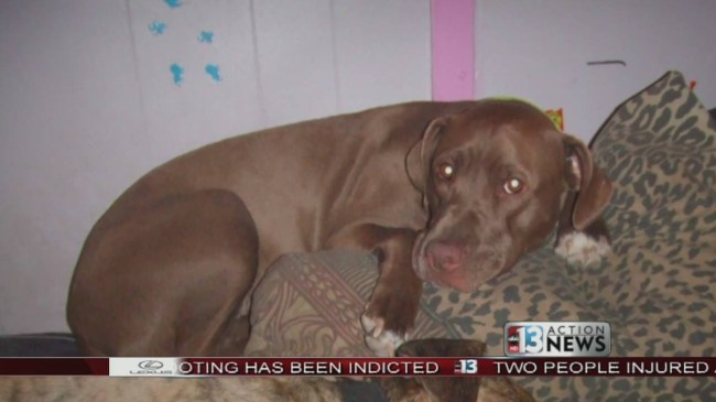 People area taking issue with the many stories of police shooting dogs.