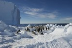 emperor penguin colony antarctica