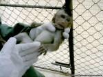 ADI monkey animal research investigation