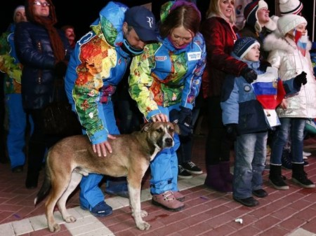 Stray dogs, Russia, Sochi, Olympics,