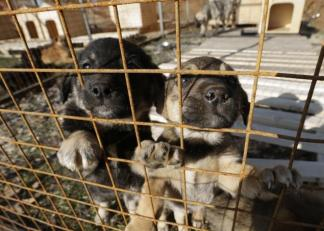 Animal lovers rescued stray dogs from the streets of Sochi, Russia after the local government hired a pest control company to kill thousands of them in preparation for the Winter Olympics. Now they're desperately looking for people to adopt them./ Photo credit: nydailynews.com