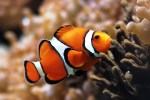 Fish have more than 20 pain receptors in their mouths and heads. Photo credit: Sciencelakes.com