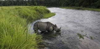 (WILDLIFE/POACHING) In 2013, Nepal successfully stopped all poaching.