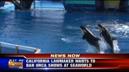 """Inspired by allegations of animal abuse made in the  documentary """"Blackfish,"""" a California lawmaker introduced legislation that would ban SeaWorld from using orcas in its San Diego shows./Photo credit: KUSI.com"""