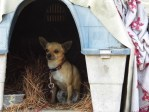 Squirrel, chihuahua, rags-to-riches, PETA