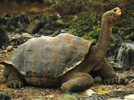 animals.nationalgeographic.com  450x337 25 Most Bizarre & Fascinating Animal Facts