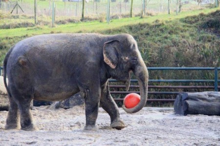 Anne The Elephant, Zoos, Circus Abuse, Animals Elephants
