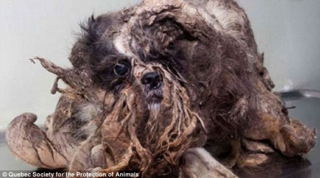 Not garbage: This little dog was found on the side of the road. Photo Credit: dailymail.co.uk