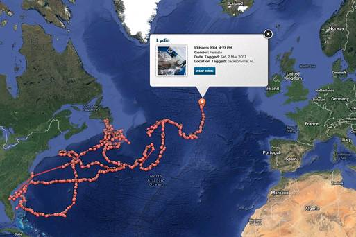 sharks, great white shark, science, shark tracking, ocean, sea, boating, animal research, pictures of sharks