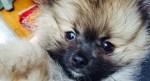 Miley Cyrus New Puppy Dog Moonie