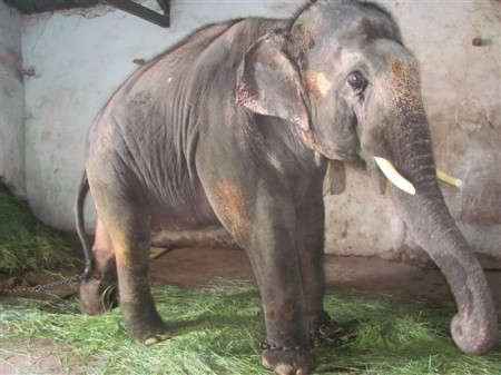 Saunder's supporters include  Paul McCartney, Pamela Anderson,  and a plethora of Bollywood stars. Photo Credit: PETA