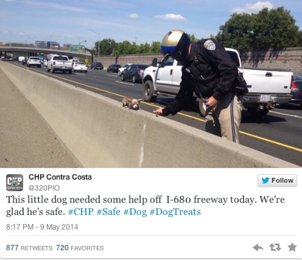 Chihuahua, chihuahua rescue. california, california highway patrol, touching tales, cute pictures, Facebook