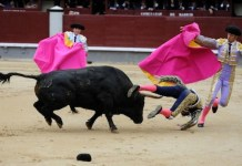 Bull fighting, Madrid, Spain, Matador