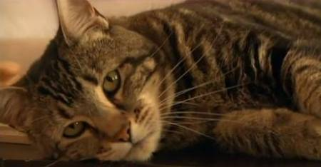 """Tara the """"Hero Cat"""" will throw out the first pitch at Tuesday's Bakersfield Blaze game./Photo credit: independent.co.uk"""