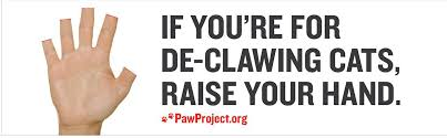 Declawing your cat leads to higher rates of felines in the shelter. photo credit: animalfair.com