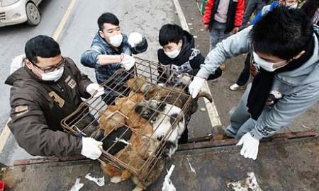 Chinese locals claim that eating dog-meat is a form of tradition. Photo credit: Quirky China News/Rex Features