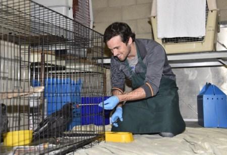 The Fund for Animals Wildlife Center, Ian harding, Wildlife, Pretty Little Liars, Animal Rehab, Rehab Centers, Red-tailed Hawks