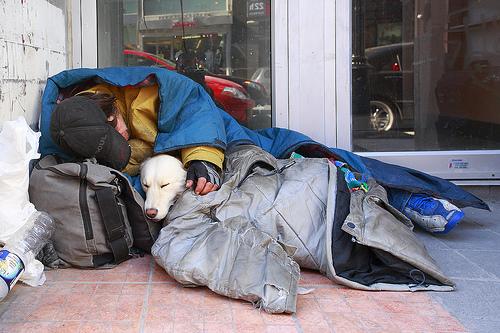 canada, homeless, homeless people, homeless pets, dogs, animal rights, animal welfare