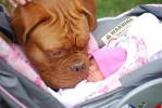 Large Dog and Baby in Car seat