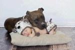 Dog Naps On baby
