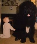 Tiny Baby Next To Large Dog