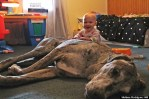Large Dog And Baby Play