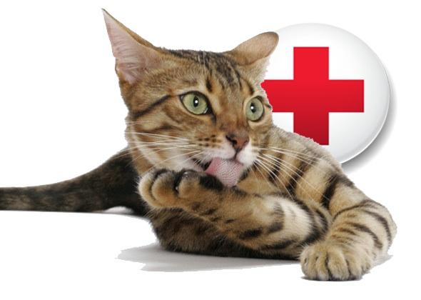 Pet Insurance: Protect Your Pet & Your Wallet