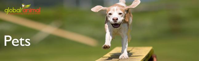 kallie Pets_beagle