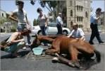 Haifa Horse