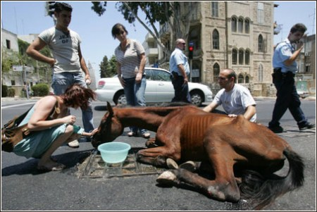 Hakol Chai documented the abuse of working horses and donkeys. Photo credit: Alex Roskowsky for NRG from CHAI