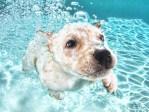 Cute Puppy Swimming